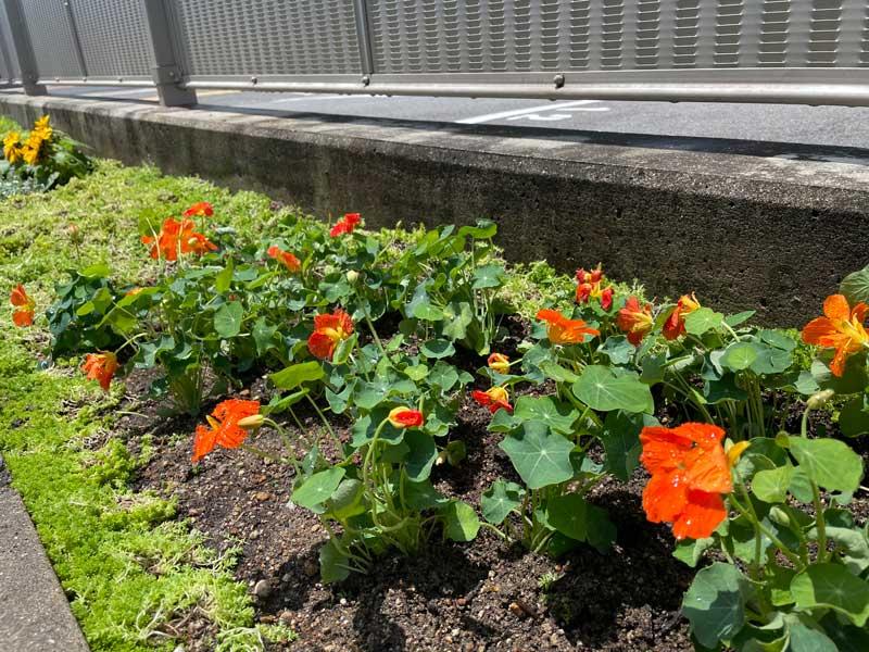 花壇をきれいに植え替えたい(^^♪